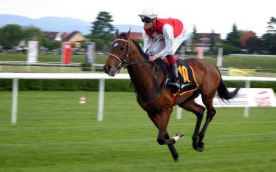 Hesteveddeløp tips – en guide til å vinne